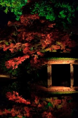 soku_06906.jpg :: 六義園 風景 自然 紅葉 赤い紅葉 夜景