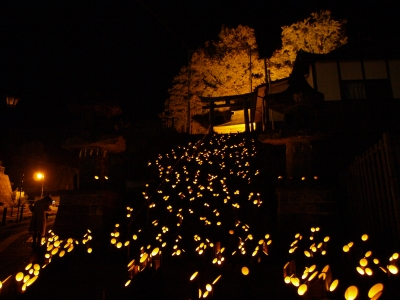 soku_07528.jpg :: 風景 自然 森林 竹林 夜景