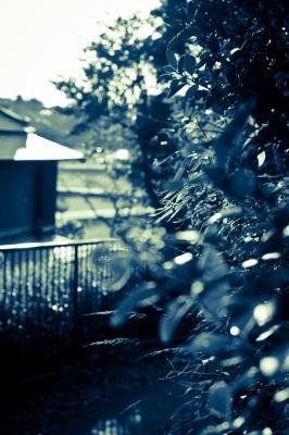 soku_07858.jpg :: 植物 樹木 広葉樹