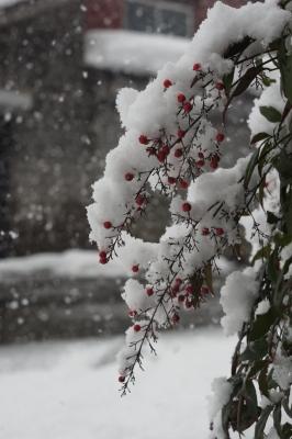 soku_08051.jpg :: 風景 自然 雪