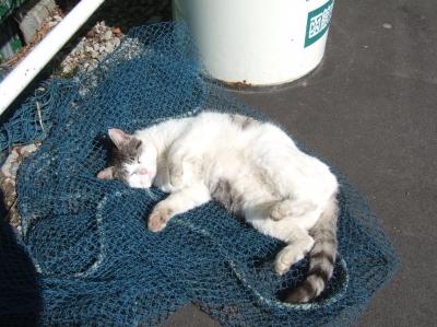 soku_08599.jpg :: ねこ2 動物 哺乳類 猫 ネコ