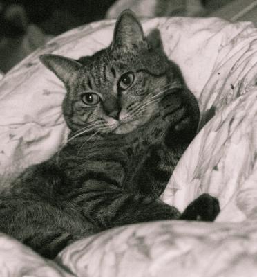 soku_08645.jpg :: 動物 哺乳類 猫 ネコ