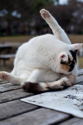 soku_08695.jpg :: 動物 哺乳類 猫 ネコ オナニー