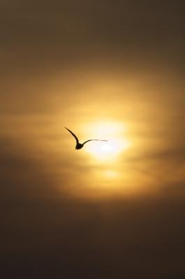 soku_09354.jpg :: 動物 鳥 鷗 カモメ ウミネコ