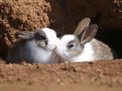 soku_09611.jpg :: 動物 哺乳類 兎 ウサギ