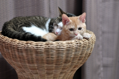 soku_09815.jpg :: 動物 哺乳類 猫 ネコ 子猫