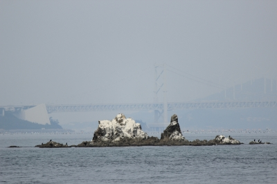 soku_09947.jpg :: 建築 建造物 橋 鳴門大橋