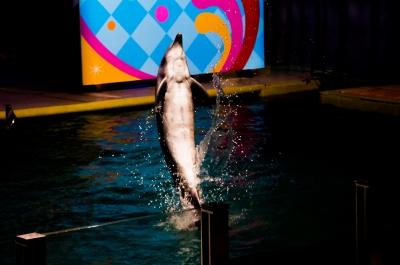 soku_10019.jpg :: 動物 海の生物 イルカ 水族館