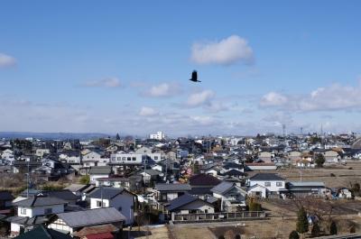 soku_10122.jpg :: 風景 街並み 都市の風景 住宅街 動物 鳥