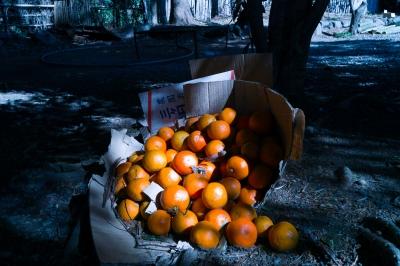soku_10126.jpg :: 風景 食べ物 食材 果物 みかん