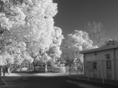 soku_10196.jpg :: 赤外線 風景 樹木 モノクロ