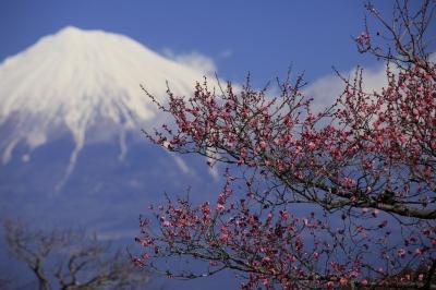 soku_10197.jpg :: 風景 自然 山 富士山