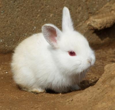 soku_10325.jpg :: 動物 哺乳類 兎 ウサギ