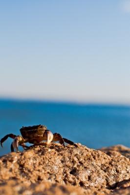soku_10330.jpg :: 動物 海の生物 カニ