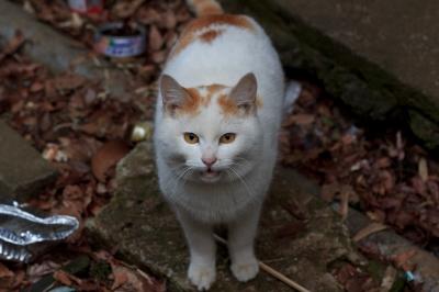 soku_10399.jpg :: 動物 哺乳類 猫 ネコ