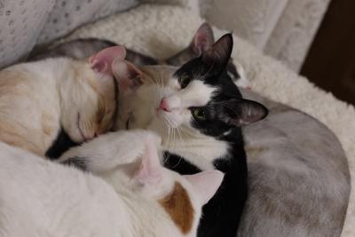 soku_10421.jpg :: 動物 哺乳類 猫 ネコ