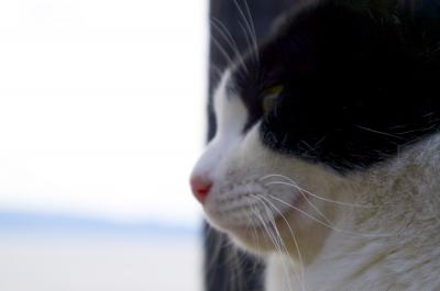 soku_10471.jpg :: 動物 哺乳類 猫 ネコ