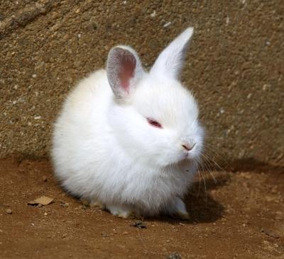 soku_10587.jpg :: 動物 哺乳類 兎 ウサギ