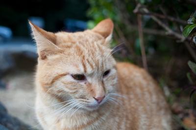 soku_10604.jpg :: 動物 哺乳類 猫 ネコ