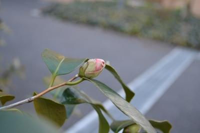 soku_10642.jpg :: 植物 花 つぼみ