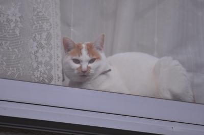 soku_10723.jpg :: 動物 哺乳類 猫 ネコ 窓際