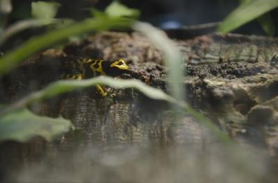 soku_10746.jpg :: 動物 爬虫類 両生類 カエル