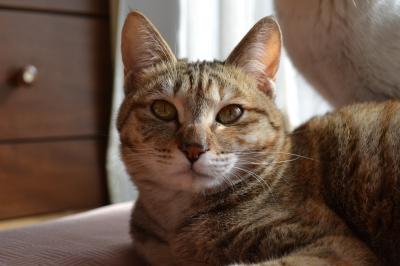 soku_10829.jpg :: 動物 哺乳類 猫 ネコ