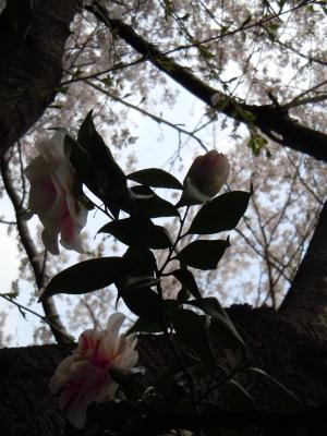 soku_10888.jpg :: 植物 花