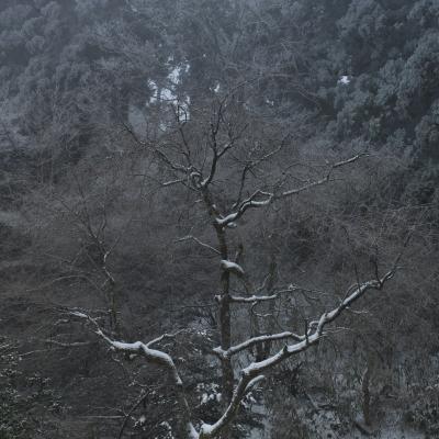 soku_11511.jpg :: 風景 自然 樹木 枯れ木 スクエアフォーマット