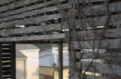 soku_11636.jpg :: 建築 建造物 廃屋 空き家 植物 その他 つた