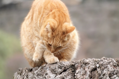 soku_11969.jpg :: 動物 哺乳類 猫 ネコ