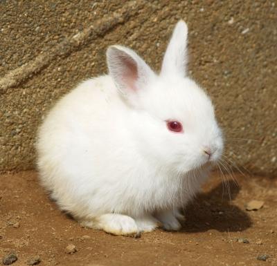 soku_11973.jpg :: 動物 哺乳類 兎 ウサギ