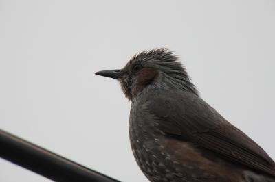 soku_12178.jpg :: 動物 鳥