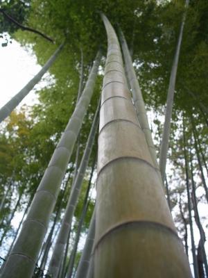 soku_12258.jpg :: 風景 自然 森林 竹林