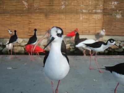 soku_12397.jpg :: 動物 鳥