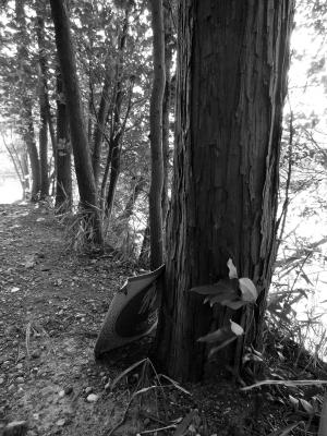soku_12439.jpg :: 風景 植物 樹木 その他 モノクロ