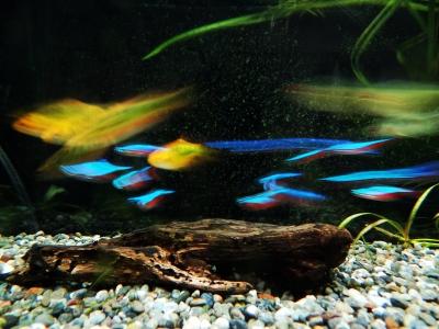 soku_12466.jpg :: 動物 ペット 熱帯魚
