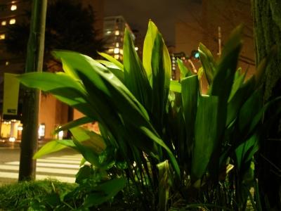 soku_12581.jpg :: 風景 街並み 都市の風景 植栽 夜景