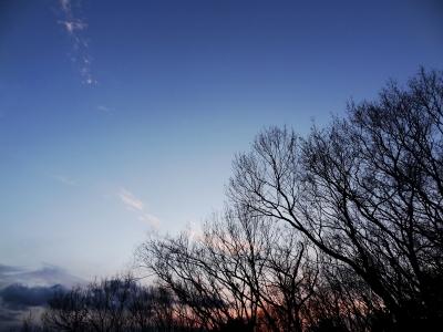 soku_12692.jpg :: 風景 自然 空 樹木