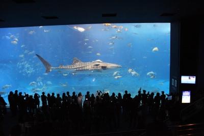 soku_12990.jpg :: 水族館 鮫 サメ ジンベイザメ