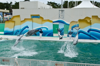 soku_12997.jpg :: 水族館 ショー イルカショー