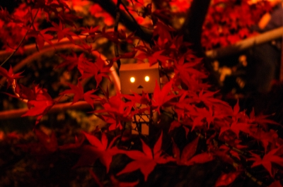 soku_13351.jpg :: 風景 自然 紅葉 赤い紅葉 アート 工芸品 クラフト 人形 フィギュア ダンボー