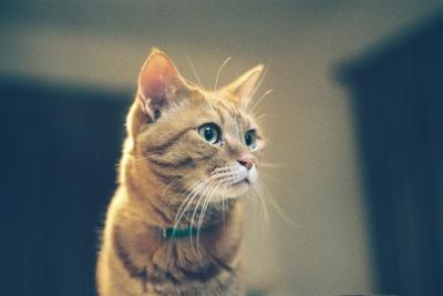 soku_13763.jpg :: 動物 哺乳類 猫 ネコ 子猫