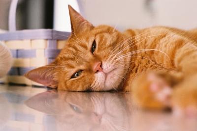soku_13764.jpg :: 動物 哺乳類 猫 ネコ