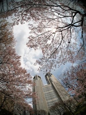 soku_13882.jpg :: 植物 花 桜 サクラ 建築 建造物 高層ビル 魚眼レンズ フィッシュアイ