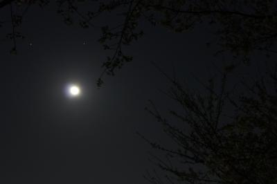 soku_13942.jpg :: 土星 スピカ 満月 桜