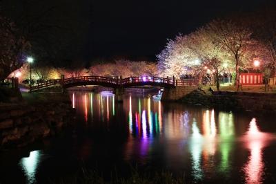 soku_13975.jpg :: 植物 花 桜 サクラ 夜桜 公園 色 光 ライトアップ
