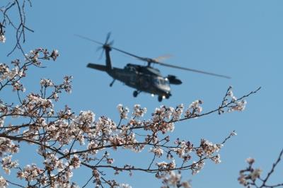 soku_14003.jpg :: UH.60J 救難ヘリ 熊谷基地 桜
