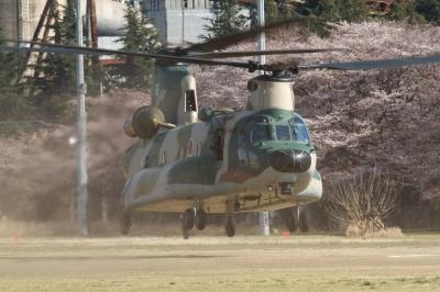 soku_14004.jpg :: 輸送ヘリコプター CH-47J 熊谷基地 桜