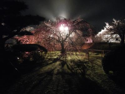 soku_14291.jpg :: 植物 花 桜 サクラ 夜桜